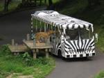Lion_bus