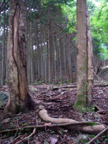Shikanomon