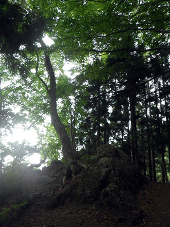 Iwakarahaeruki