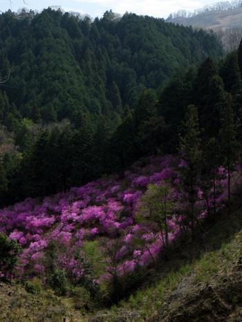 Tsutsujitani2
